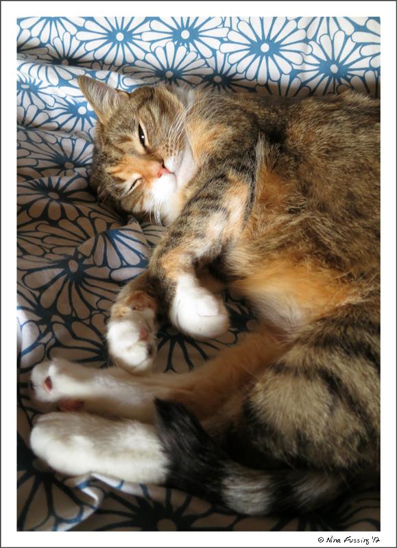 cat <a rel='nofollow' target='_blank' href=