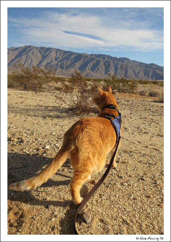 Taggart goes for a walk in the desert