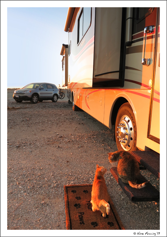 The kitties discuss the Arcitc Blast by the RV
