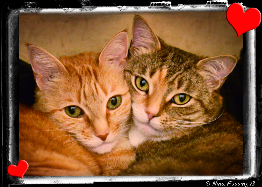 N-20130210 Cats (5) (JPG)