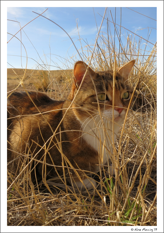 A Cienegas wildcat?