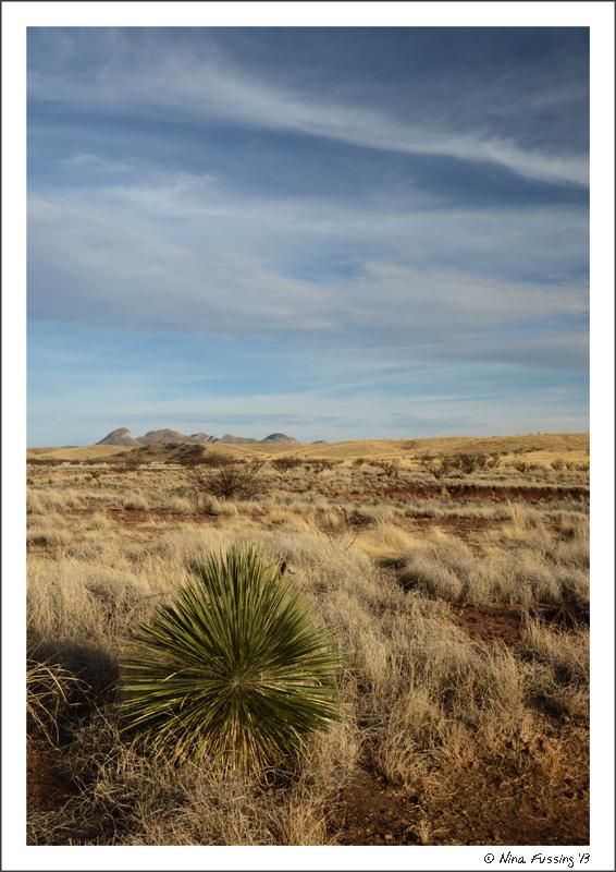 Grassland views