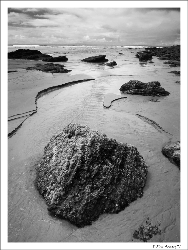 The tide-pools at Oswald West State Park