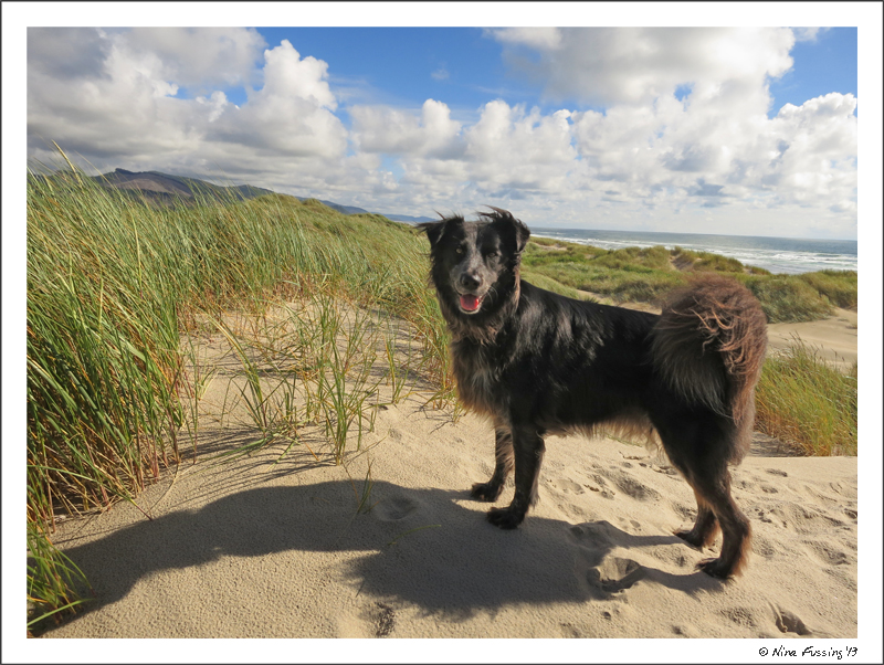 On the dunes at Nehalem Bay