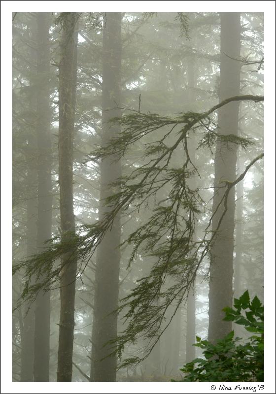 More foggy goodness
