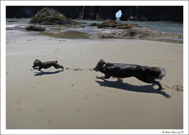 Polly & Sissy (Gunta's pooch) play on the beach