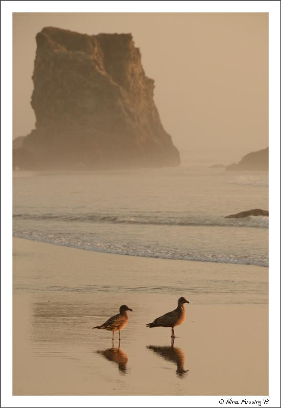 A coupla birds on the beach