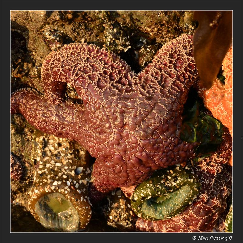 Starfish glow in late sun