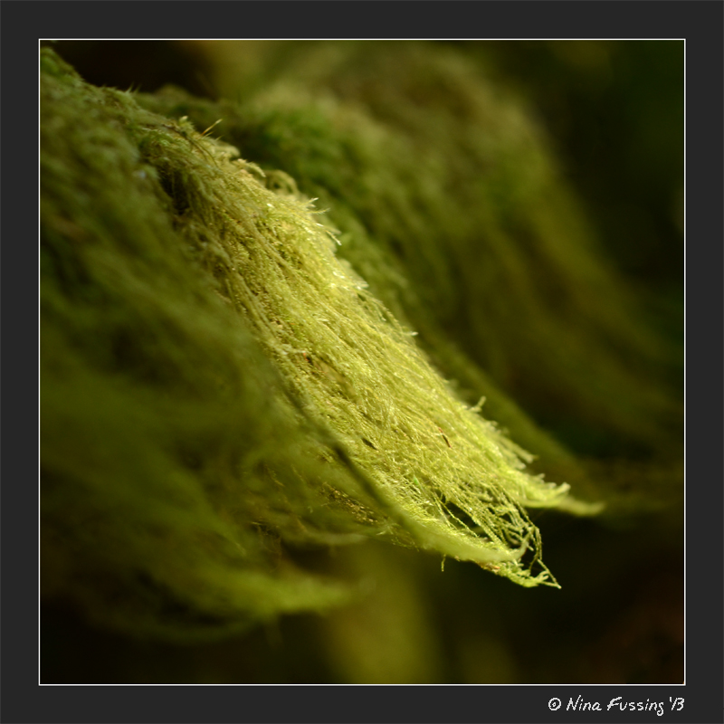 A wisp of light on moss