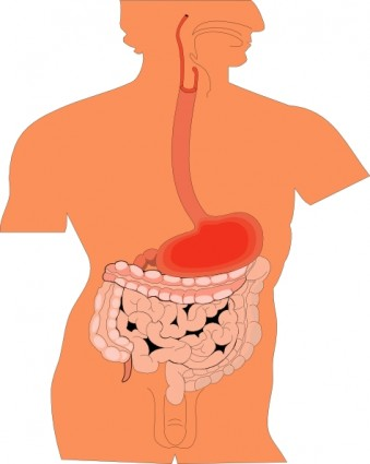 The human gut is a fascinating topic!