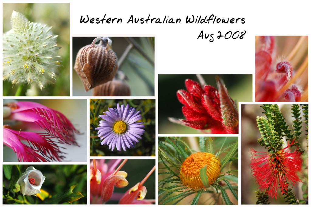 Wildflower Collage MOD-JPG