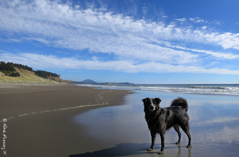 Back on the deserted beaches of Cape Blanco State Park...oh yeah baby!