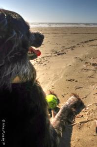 Polly enjoys the heatwave by the beach