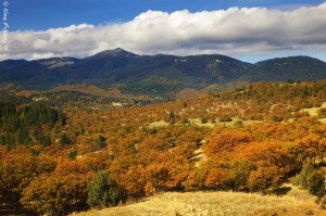 There's still quite a bit of color on Hwy 5